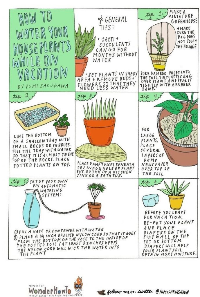 DIY tips for watering your plants while you're on vacation
