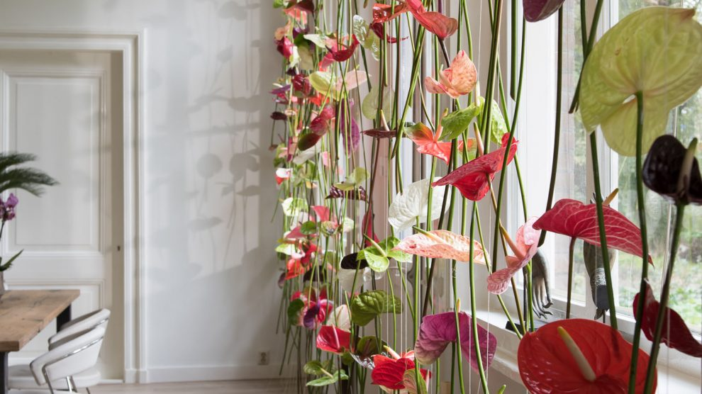 Anthurium curtain window decoration
