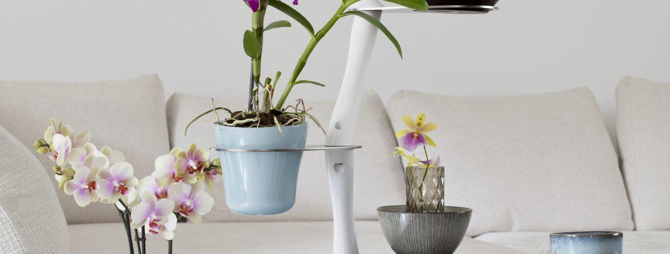 Orchid Twister Francois Hannes