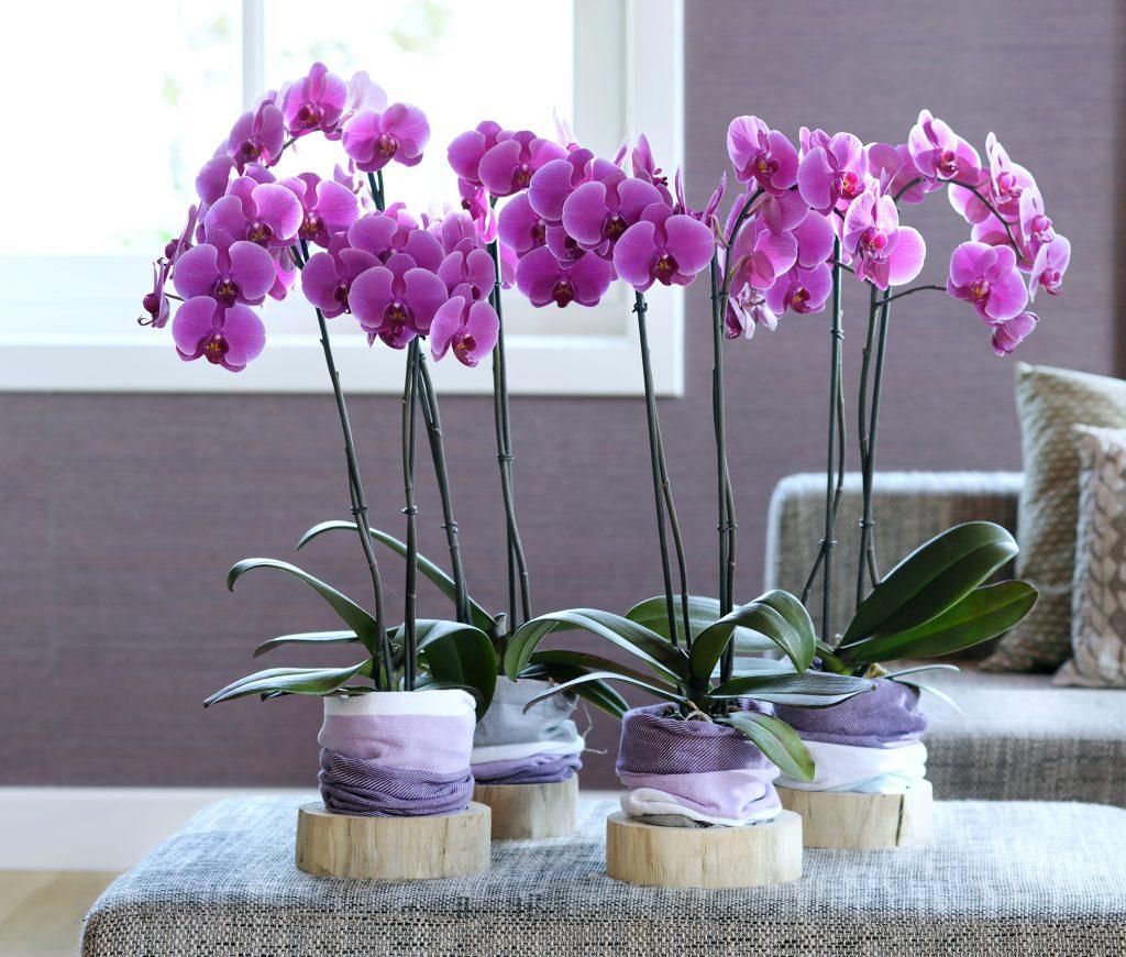 Verleng de zomer met bloemen en planten! - Bloomifique