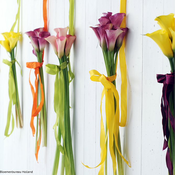 favouriteflower_meaning_calla