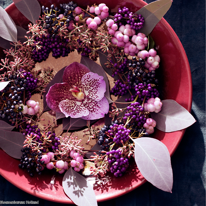 favouriteflower_meaning_orchid