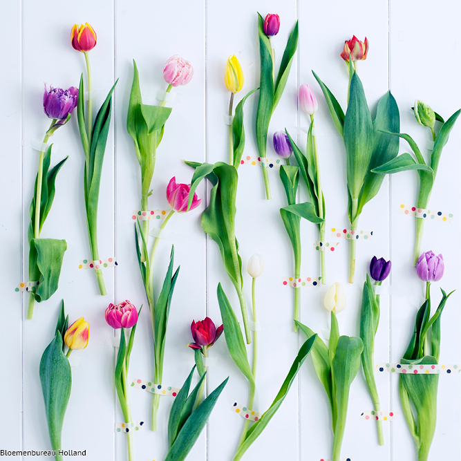 favouriteflower_meaning_tulip