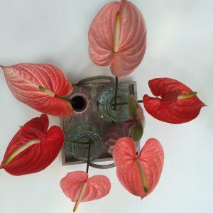 Birght Anthurium flowers decoration