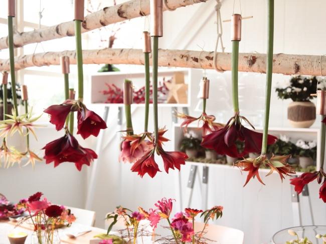 Hanging Amaryllis