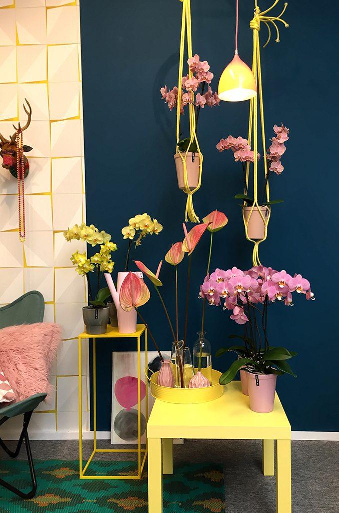 Lente in je interieur met kleur