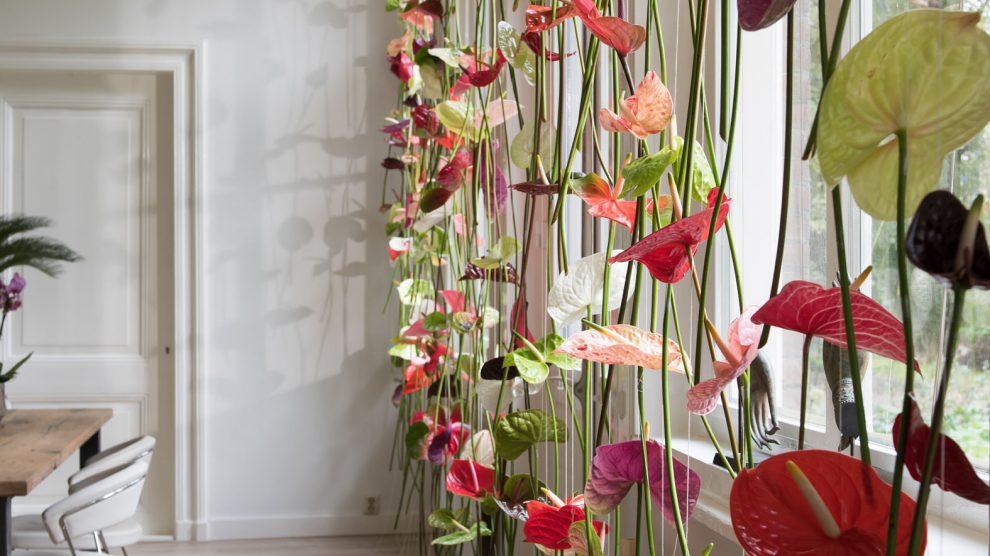 originele raamdecoratie anthurium bloemengordijn