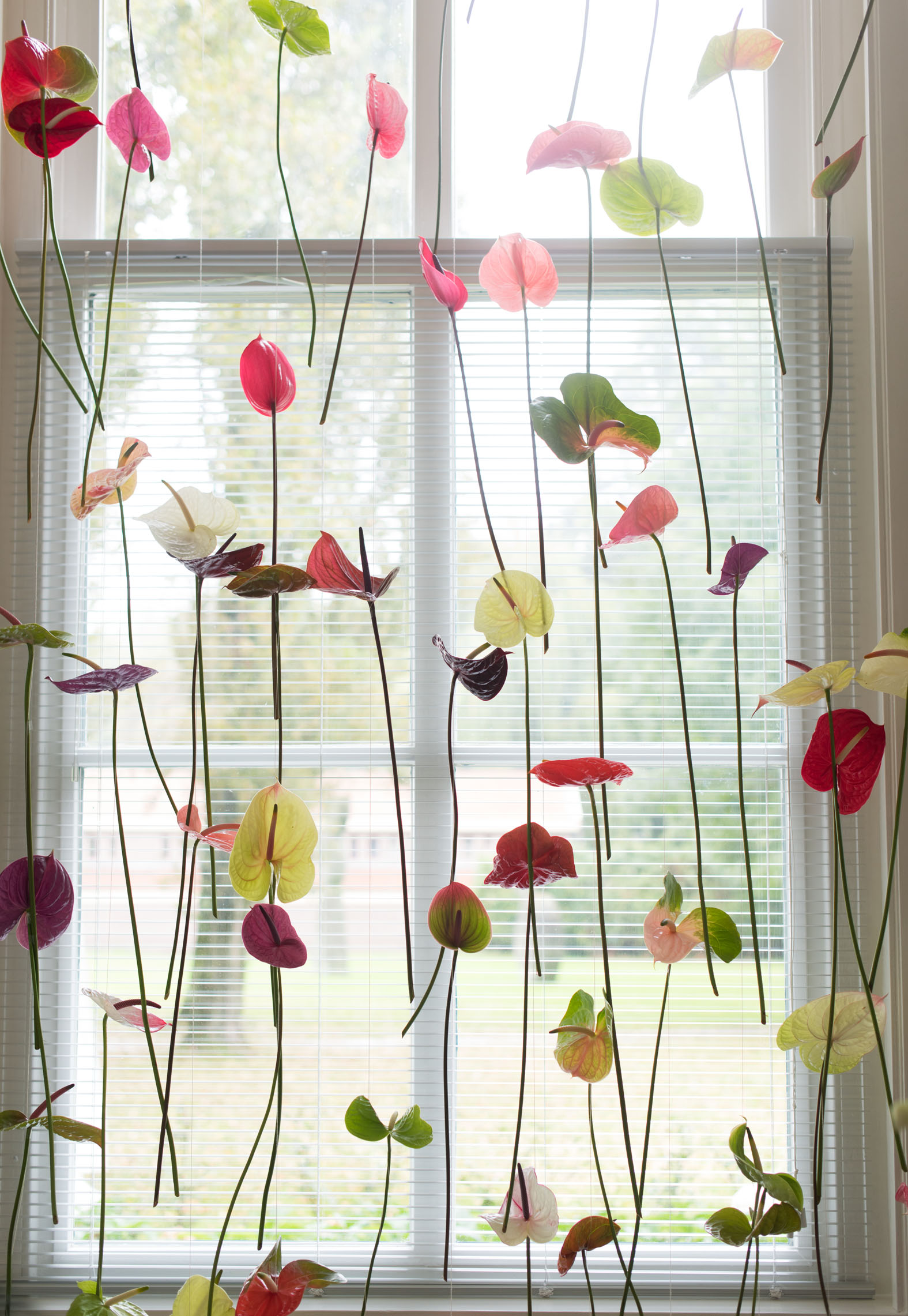 Anthurium curtain window decoration  sc 1 st  Bloomifique & Original window decoration: Anthurium flower curtains - Bloomifique