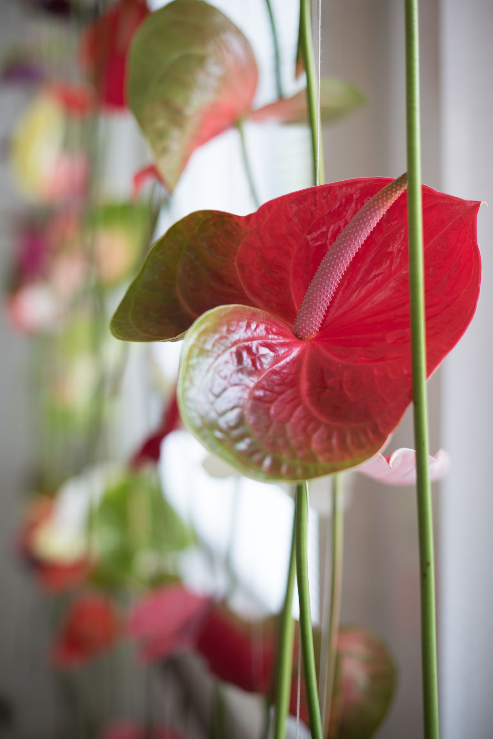 Original Window Decoration Anthurium Flower Curtains Bloomifique