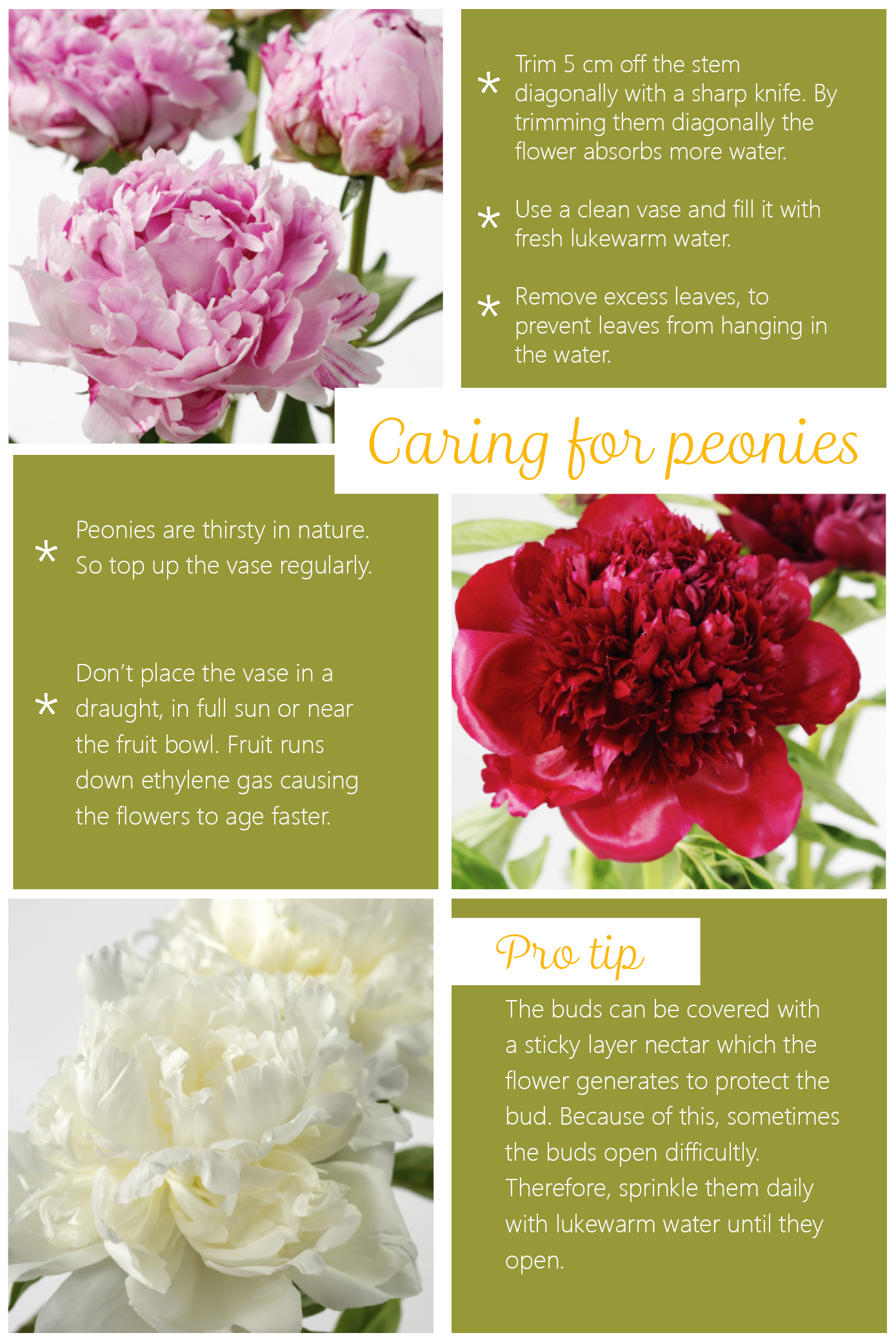 caring for peonies