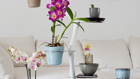 Decoratie Planten Woonkamer : Decoratie archives pagina van bloomifique