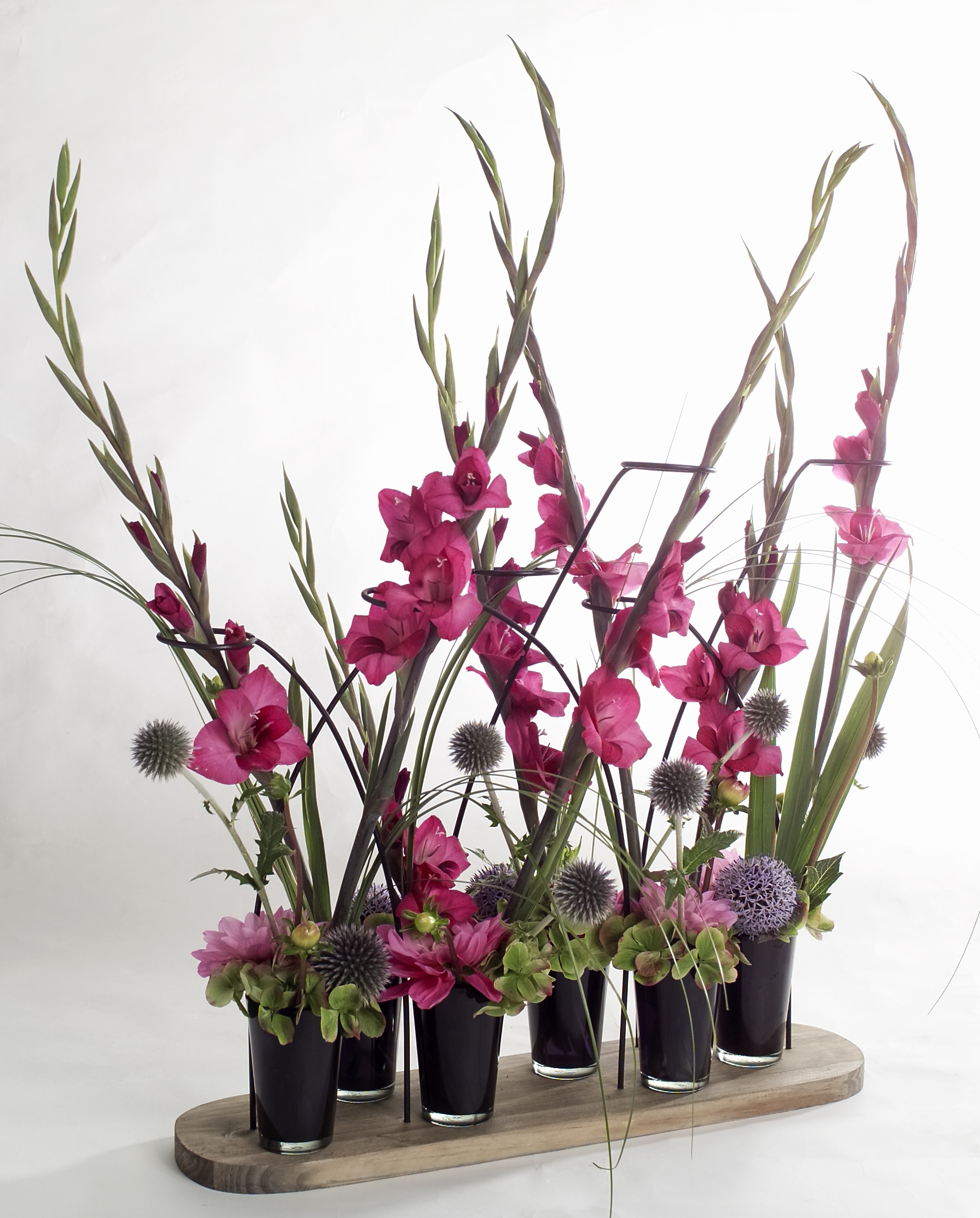 Bien-aimé Gladiolus: The hero among the flowers - Bloomifique TO14