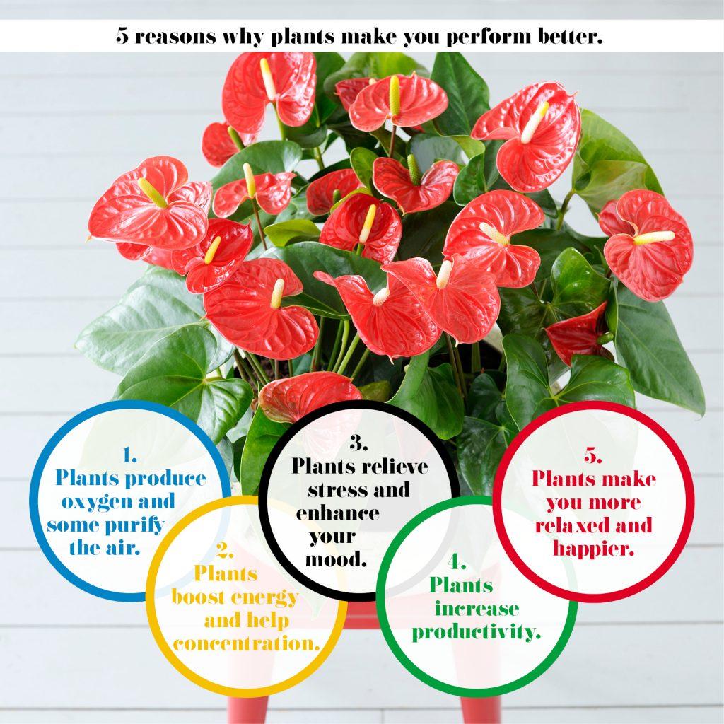 Waarom planten helpen een Olympische prestatie neer te zetten