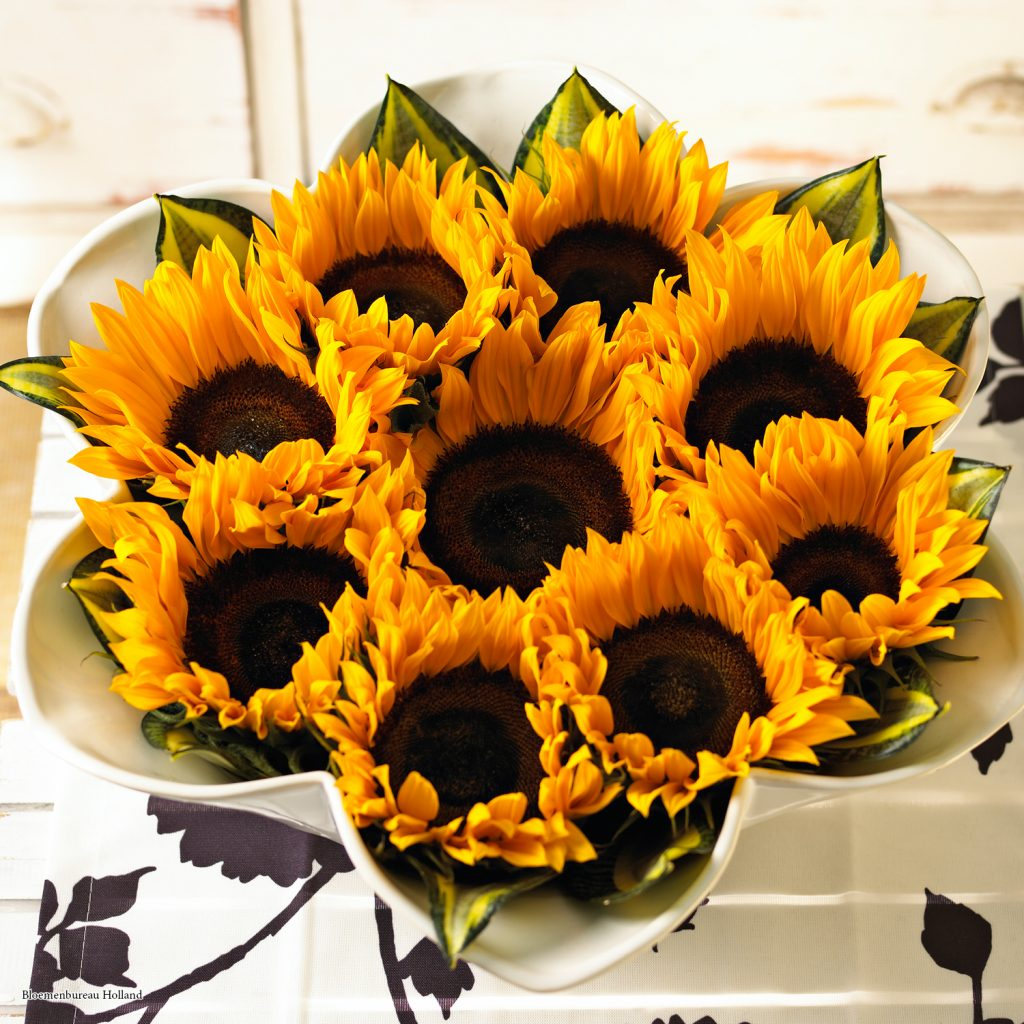 Sunflowers; Bloemenbureau Holland