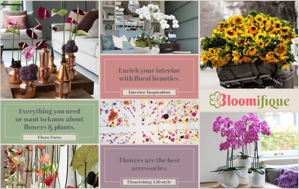 Bloomifique the new interior and lifestyle inspiration blog