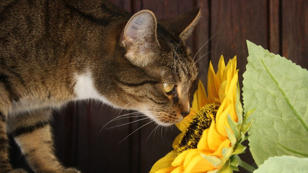 Plants approved by pets that won't kill them