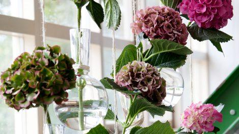 Hydrangea cutflowers a year-round favourite