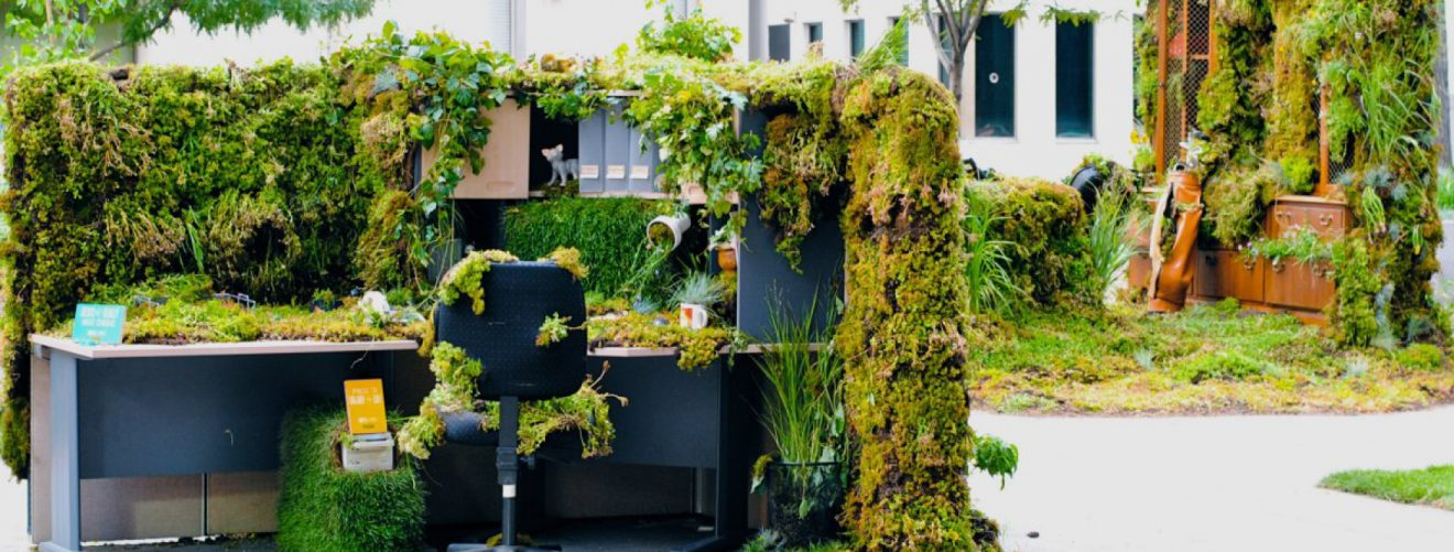 Why should you have plants at the office? They make you healthy and more productive.