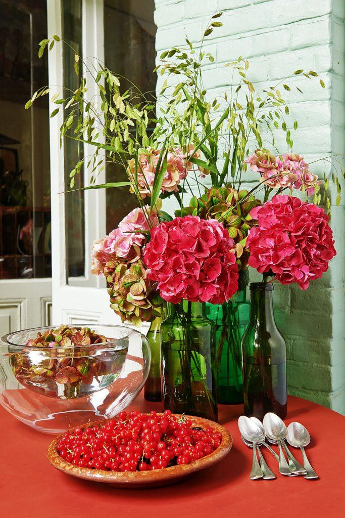 Hydrangea Autmn picture credits hydrangeaworld.com