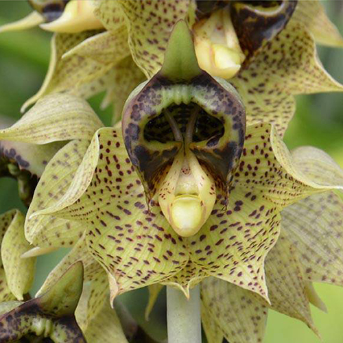 The 10 Most Scary Flowers Bloomifique