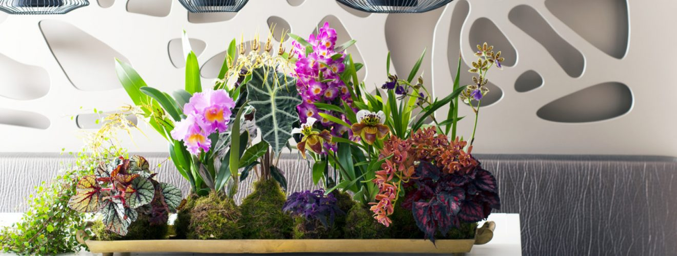 Do you know these 10 special members of the orchid family? Take this quiz to find out