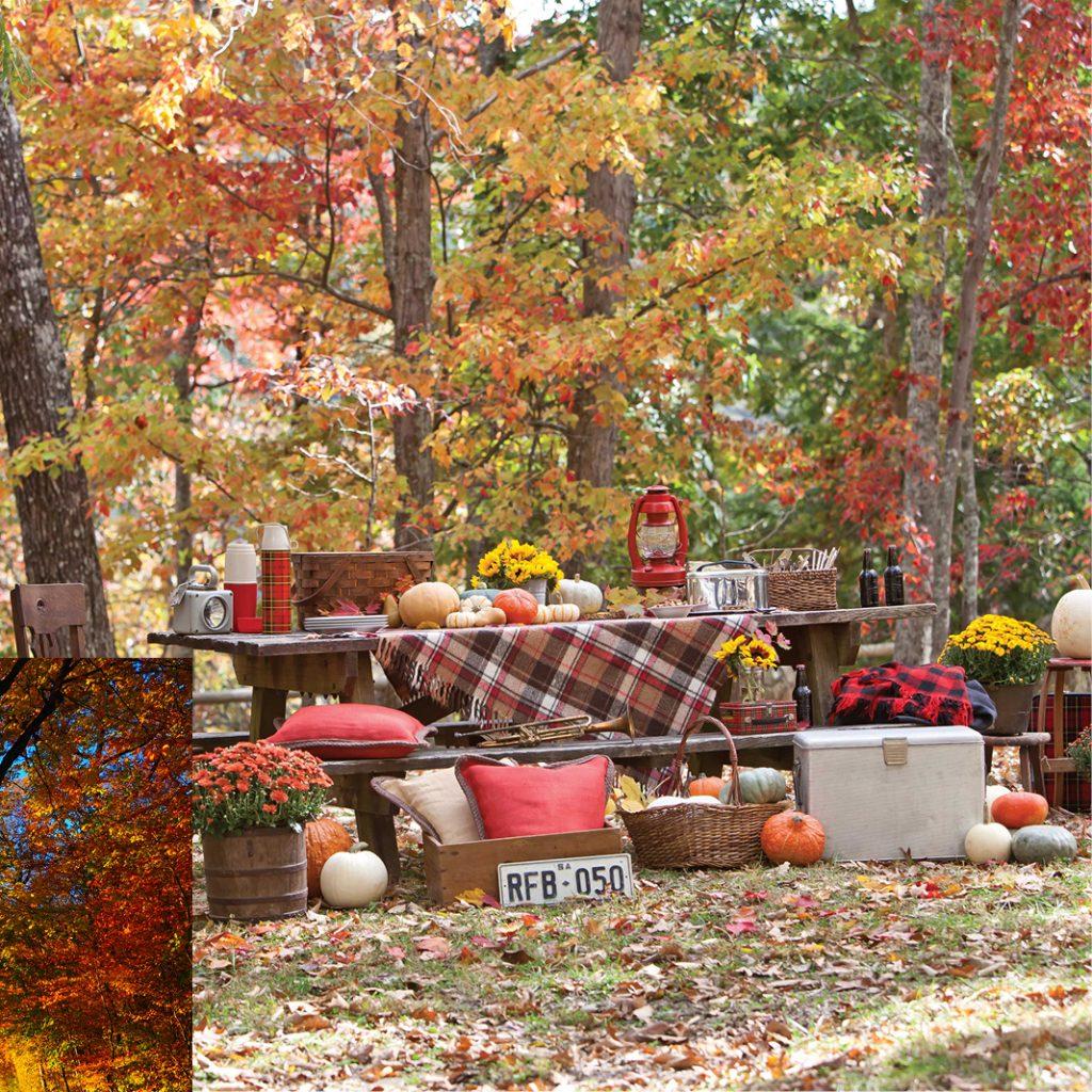 Autumn picnic to beat autumn blues