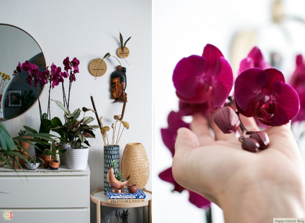Anthura Stellenbosch styled by Happy Interior Blog for Urban Jungle Bloggers