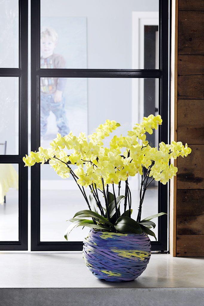 gele phalaenopsis