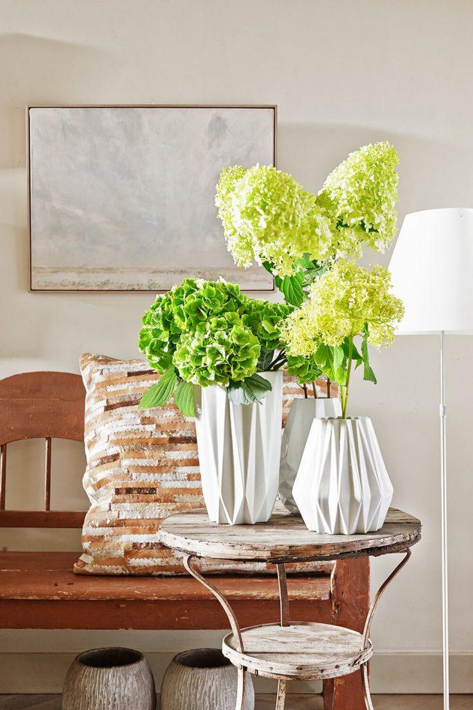 Green Hydrangea for spring | Hydrangea world