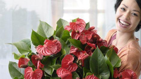 Hoe komt het dat we blij worden van bloemen?