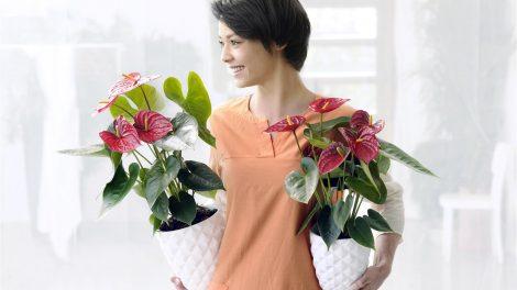 Bloemen zijn goed voor je gezondheid!