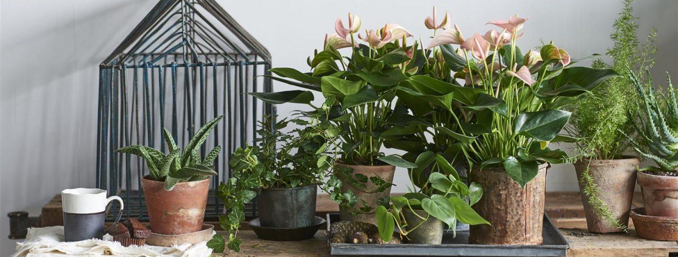 Leuke cadeaus voor plantenliefhebbers