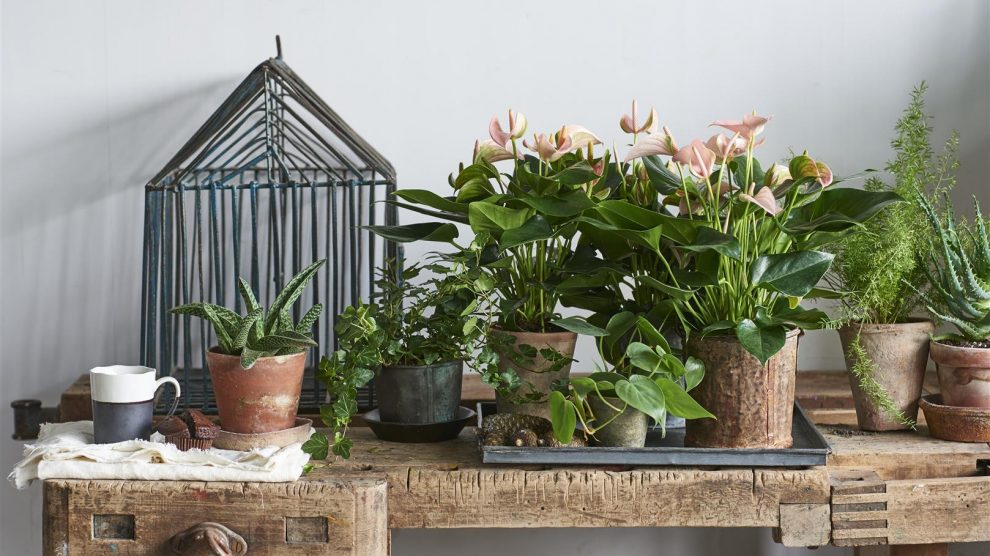 6 gift ideas for plant lovers