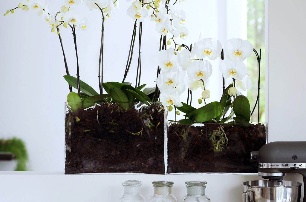 Diy 3 Ideas To Make Your Own Green Terrarium