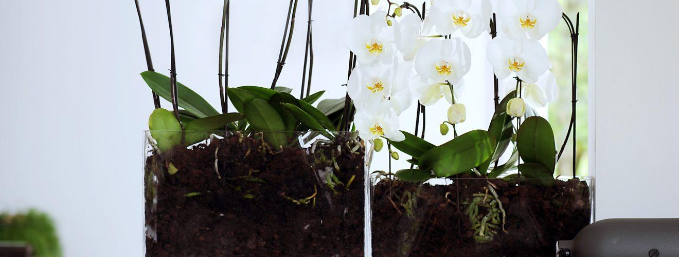 make your own green terrarium