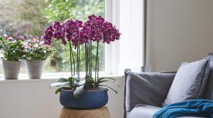 Tips voor een orchidee met gele bladeren