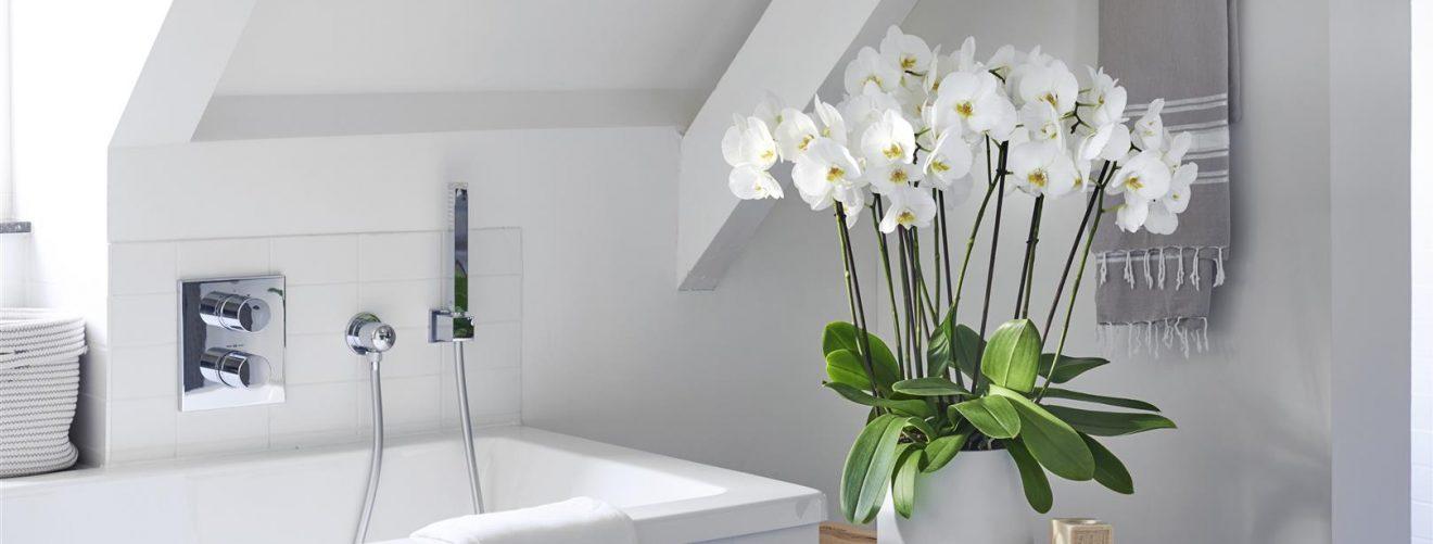 Planten Voor In De Badkamer.De 4 Beste Planten Voor In De Badkamer