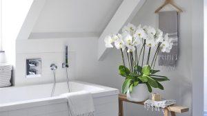 De beste planten voor in de badkamer