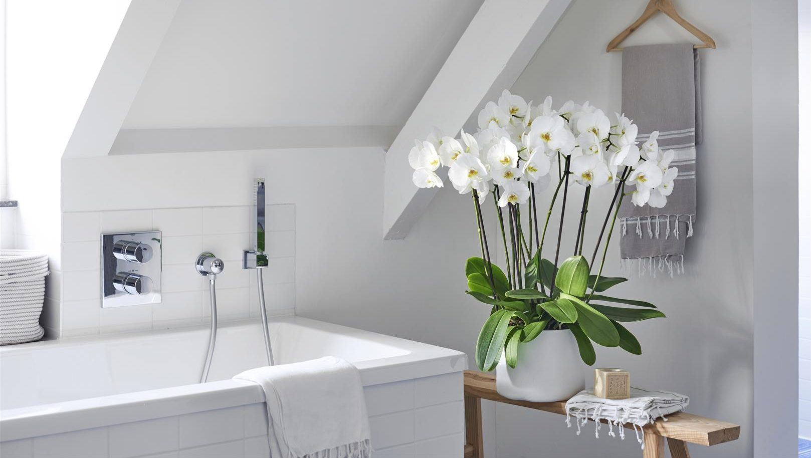 De 4 beste planten voor in de badkamer