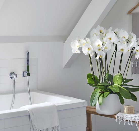 The 4 best plants for your bathroom