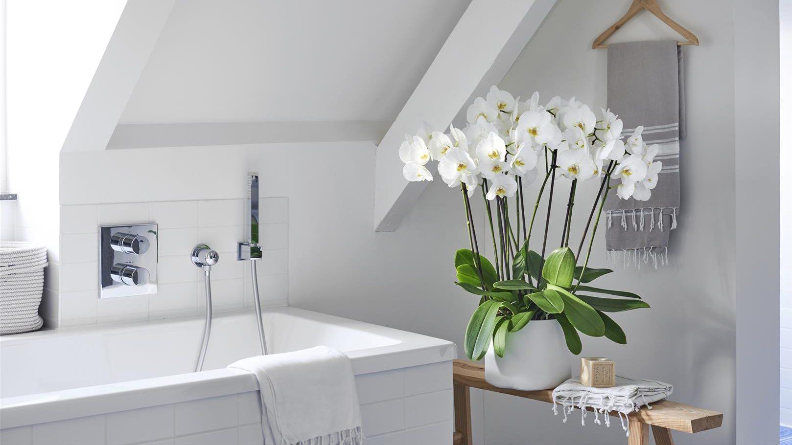 planten-voor-in-de-badkamer-orchidee-orchideeën-urban-jungle ...