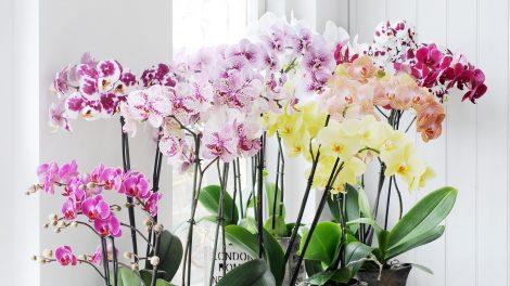 De verschillende soorten orchideeën