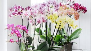 These are the 7 most popular orchid varieties