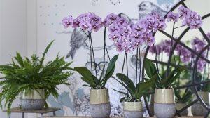 Orchidee kopen? In deze winkels en webshops moet je zijn