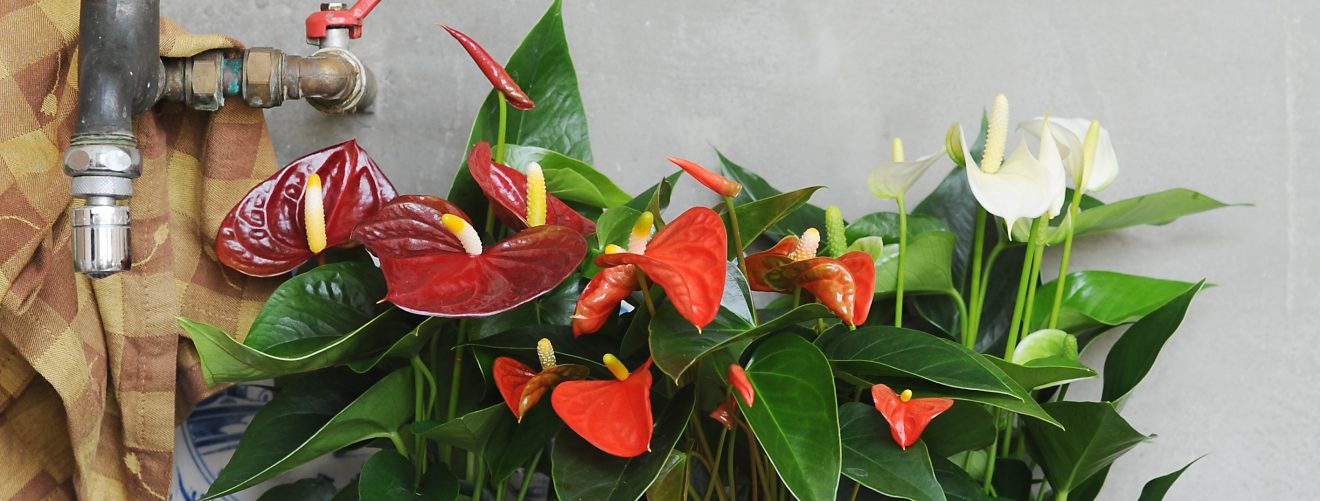 How to take care of your plants while you're on holiday