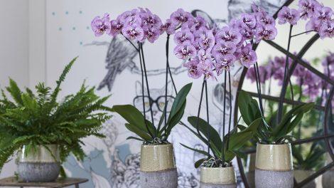 Planten met een panterprint