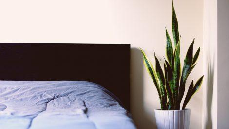 cheap houseplants