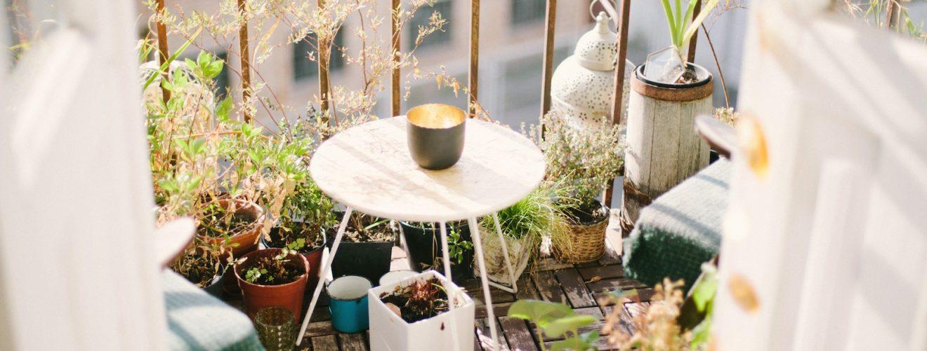 5 planten die muggen weghouden