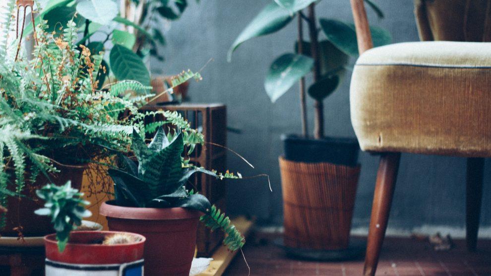 5 planten die nauwelijks verzorging nodig hebben