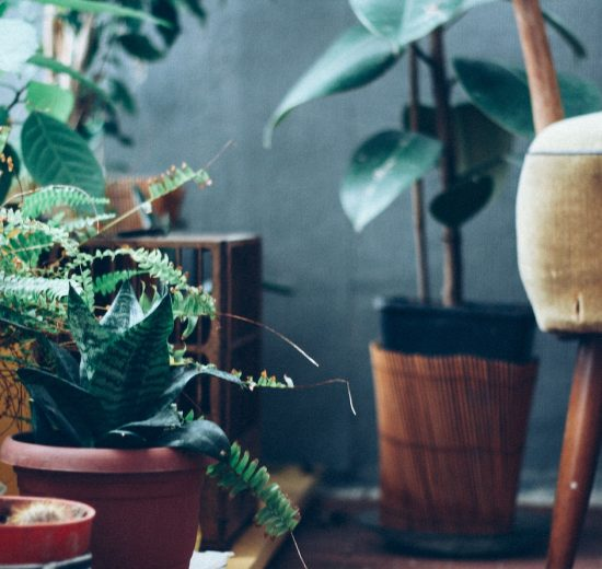 5 indoor plants that are hard to kill